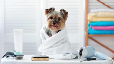 Grooming para mascotas: dale el cuidado perfecto al engreído de casa